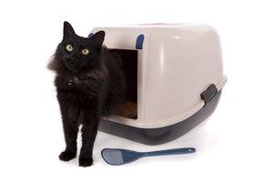 Unsauberkeit kann bei Katzen verschiedene Gründe haben.