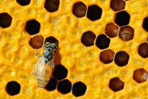 Bienenwachs findet auch in Wickeln Anwendung.