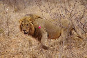 Die Welttierschutzgesellschaft fühlt sich für den Tierschutz verantwortlich.