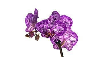 Orchideen sind recht empfindlich.