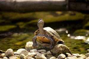 Schildkröten lieben ein abwechlungsreiches Terrain.