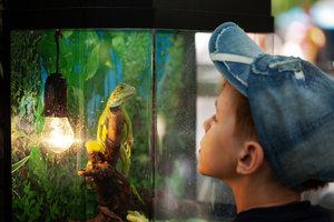 Bei der Beleuchtung gibt es viel zu beachten, damit Reptilien sich wohlfühlen.