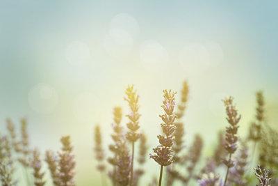 In der Lyrik spielt die Natur eine große Rolle.