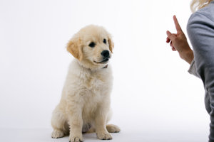 Beschäftigen Sie den Hund auch, wenn Sie nicht dran sind.