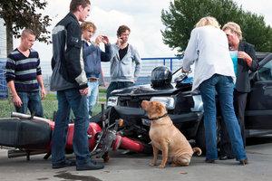 Schnell ist es passiert - ein Hund verursacht einen Unfall.
