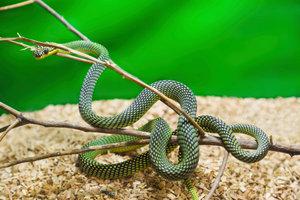 Komplett-Terrarien enthalten die Grundausstattung für Reptilien.