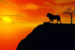 Im Gegenlicht können auch normal gefärbte Löwen schwarz aussehen.