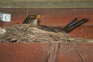Vogelnester dürfen nicht einfach entfernt werden.