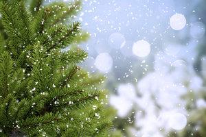 Den richtigen Weihnachtsbaum finden