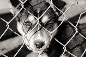 Tierschutz geht uns alle an.