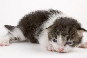 Verwaiste Katzenbabys von Hand aufzuziehen, bedarf viel Fürsorge.