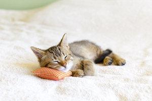 Den Antrag auf Katzenhaltung beim Vermieter freundlich stellen