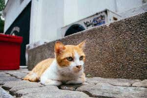 Gerade Katzen, die viel unterwegs sind, kennen Ohrenprobleme.