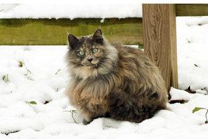 Katzen mit wenig Nase schnaufen oft aufgrund ihrer Anatomie.