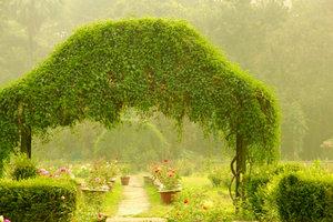 So schön kann wilder Wein den Garten begrünen.