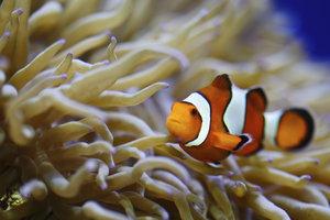 Wenn das Wasser sauber und klar ist, geht es den Fischen und Pflanzen gut.