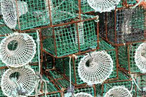 Reusen sind eine tödliche Gefahr für viele Bewohner des Gewässers