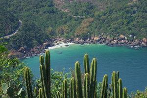 Der mehrere Meter hoch wachsende Cereus peruvianus ist in Südamerika beheimatet.