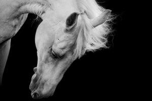 Ein besonderes Pferd hat auch einen besonderen Abschied verdient.