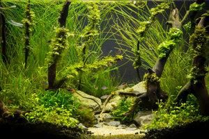 Kohlendioxid ist für üppiges Pflanzenwachstum essentiell.