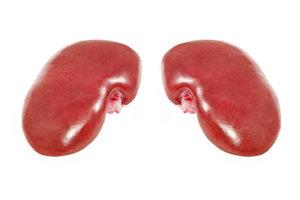 Natürlich haben auch Pferde Nieren.