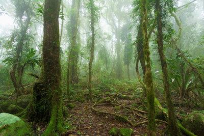 In Australien gibt es viele Regenwälder.