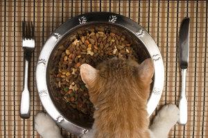 In vielen Katzenfuttersorten werden gekochte Kartoffeln verwendet.