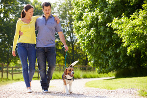 Einen entspannten Hundespaziergang durch Rituale durchführen