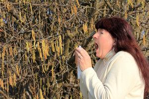Allergiegeplagte Menschen sollten windbestäubende Pflanzen meiden.