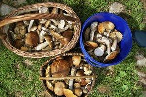Pilze eignen sich bestens zum Trocknen und Einfrieren.