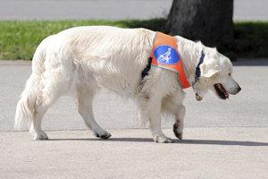 Diabetikerwarnhunde sind wie Blindenhunde eine große Hilfe.