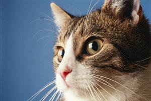 Den scharfen Augen einer Katze entgeht kaum etwas, auch Herrchen und Frauchen nicht.