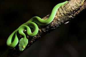 Werden Sie zur schreckhaften Schlangenfrau.