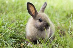 Kaninchen mit Zahnanomalien können Sie mit besonderer Ernährung helfen.