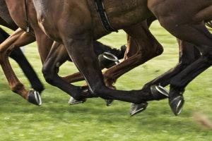 Die Beine des Pferdes sind großen Belastungen ausgesetzt - daher kommen Beinbrüche häufig vor.