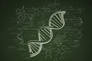 Proteine werden mit Hilfe der Erbinformation synthetisiert.