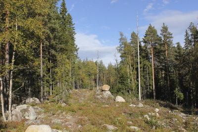 Hügellandschaften und Wälder sind typisch für Schweden.