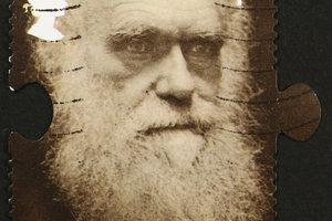 Darwins Theorie wird noch heute gestützt.