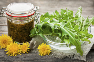 Löwenzahn ist eine Wildpflanze, die in der Küche verwendet werden kann.