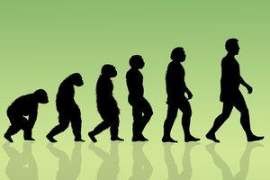 Es gibt viele Belege für eine Evolution.