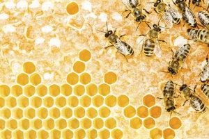 Leckerer Honig in der Waabe - nicht jeder Honig ist gleich.