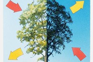Bäume führen Fotosynthese und Zellatmung durch.