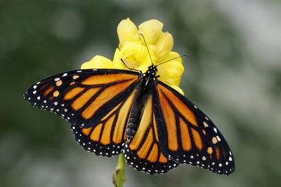 Was ein einziger Flügelschlag auslösen kann, ist bis heute ein großes Problem der Wissenschaft.