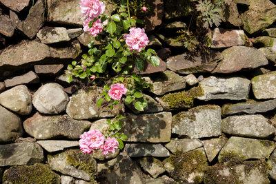 Eine Trockenmauer mit oder ohne Pflanzen, ist immer ein Blickfänger