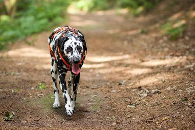 Wer Hundehaufen liegen lässt, muss Strafen nach dem Bußgeldkatalog zahlen.