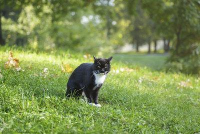 Der Bewegungsradius von Katzen ist auf dem Land besonders groß.