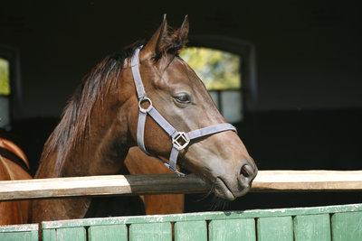 In einer luftigen, sauberen Box fühlen Pferde sich wohl.