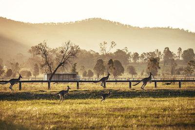 Australien hat neben Kängurus noch weitaus mehr zu bieten.