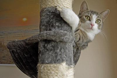 Katzen nutzen den Baum auch zum klettern.