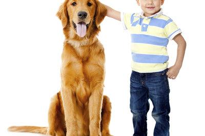 Golden Retriever sind fröhliche Hunde, in denen die jüngsten Familienmitglieder neue Freunde finden.